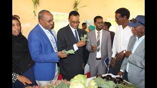 Maxaa u qabsoomay maamulka Degmada Arabsiyo?: Waraysi Mayor Hamse Haji Hussein